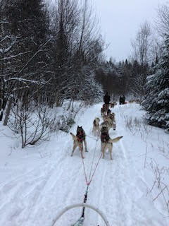 tremblant-dogsled-1